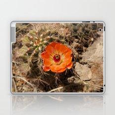 Cactus Flower (Landscape) Laptop & iPad Skin