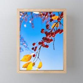 Berrybranch Framed Mini Art Print