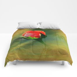 Vintage Rose Bud Comforters