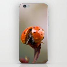 Taking Off iPhone & iPod Skin