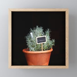 Lavender Plant Framed Mini Art Print