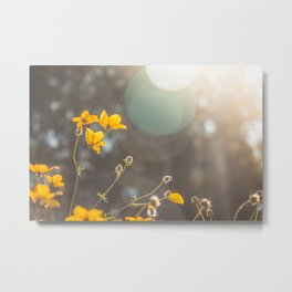 The first rays of light Metal Print