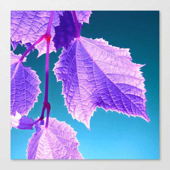 purple wine leaf Canvas Print