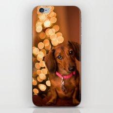 Dachshund Christmas iPhone & iPod Skin