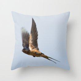Male barn swallow in flight Throw Pillow