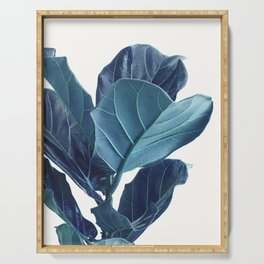 Fiddle Leaf Fig Plant, Blue Minimalist Nature Photography Serving Tray