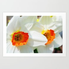 White Petals Art Print
