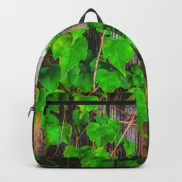closeup green ivy leaves with wood wall background Backpack