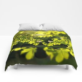 Flowering Aesculus horse chestnut foliage Comforters