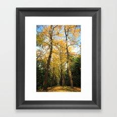 Ginkgo biloba trees Framed Art Print