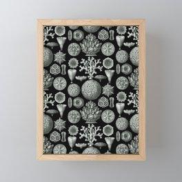 Ernst Haeckel - Hexacorallia Framed Mini Art Print