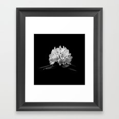 Rhododendron In Black And White Framed Art Print