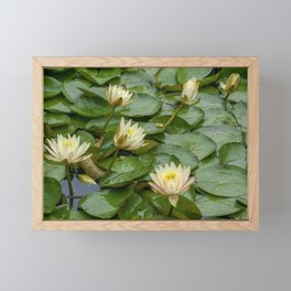 Lotus Blossoms Framed Mini Art Print