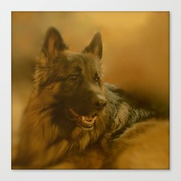 Golden King Shepherd Canvas Print