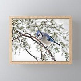April Fools' Jay Framed Mini Art Print