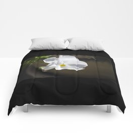 Pure Comforters