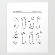 Dachshund Sleep Study. Sketches of my pet dachshund's sleeping positions. Art Print
