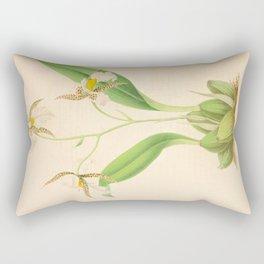 emboglossum (Odontoglossum) OrchidVintage Botanical Floral Flower Plant Scientific Illustration Rectangular Pillow