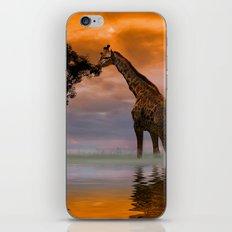 Giraffe at Sunset iPhone & iPod Skin