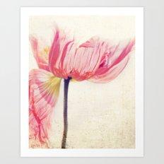 Isis. Poppy flower photograph Art Print