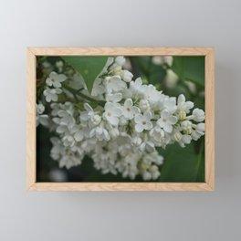 White Lilac Framed Mini Art Print