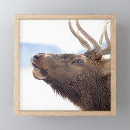 Watercolor Elk Bull 17 Framed Mini Art Print