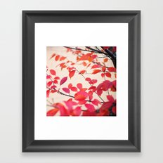 Cerise Framed Art Print