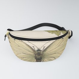 Antique Pale Green Butterfly Lithograph Fanny Pack