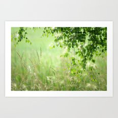 Birch leaves Art Print