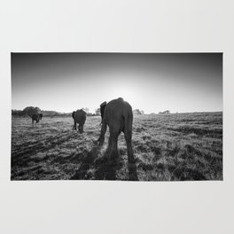 Group of African elephants walking at sunset Rug