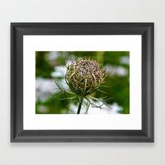 Wild Carrot Framed Art Print