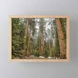 Sequoias in the Fog Framed Mini Art Print
