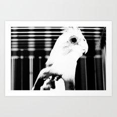 the parrot john Art Print