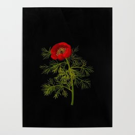 Paeonia Tenuifolia Mary Delany Vintage British Floral Flower Paper Collage Black Background Poster