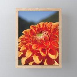 Dahlia closeup Framed Mini Art Print