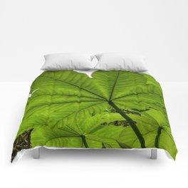 The great Yagrumo tree leaf -  El Yunque rainforest PR Comforters