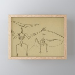 Pterodactyl Anatomy Framed Mini Art Print