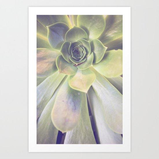 Succulent II Art Print