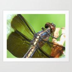 summer dragonfly V Art Print