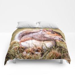 Golden Nutkin Comforters