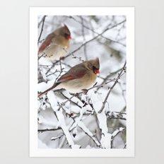 Female Cardinal Art Print