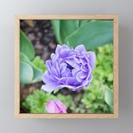 Electric Purple Flower Framed Mini Art Print
