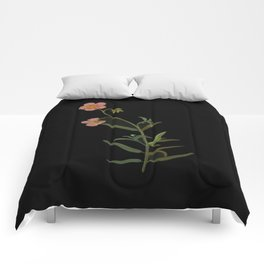 Cistus Helianthemum Mary Delany Delicate Paper Flower Collage Black Background Floral Botanical Comforters