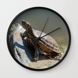 Red-Eared Slider Turtle Wall Clock