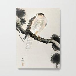 Hawk sitting on a pine tree - Vintage Japanese Woodblock Print Art Metal Print