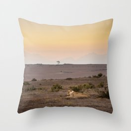 Single lioness relaxes while African sun sets Throw Pillow