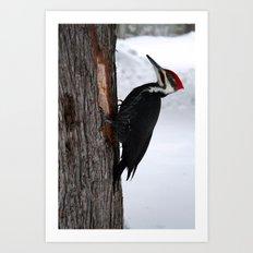 Woodpecker Art Print