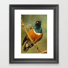 Superb Starling Framed Art Print