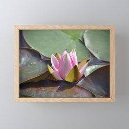 Pink Lotus Framed Mini Art Print