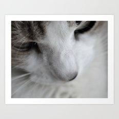Glamour Kitty Art Print